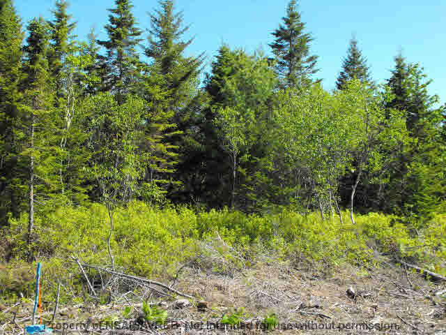 Photo 3: Photos: LOT 4 COOKS BROOK DIVERSION HWY 332 in Bayport: 405-Lunenburg County Vacant Land for sale (South Shore)  : MLS® # 5028510