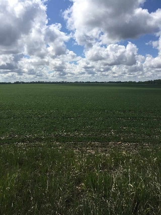 Main Photo: RR 245: Rural Sturgeon County Rural Land/Vacant Lot for sale : MLS® # E4058434