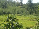 Main Photo: 53354 HWY 21: Rural Strathcona County Land (Commercial) for sale : MLS® # E4078301