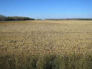 Main Photo: Hwy 44 Rg Rd 272: Rural Westlock County Rural Land/Vacant Lot for sale : MLS® # E4069023