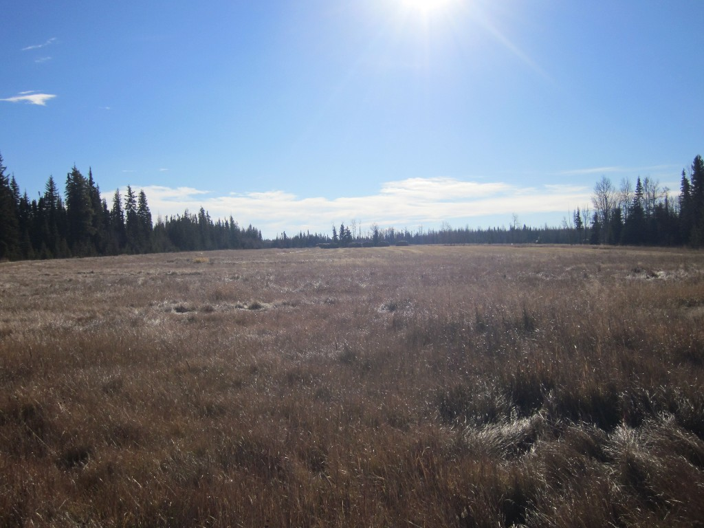Main Photo: NE 13-54 Range Road 130: Niton Junction Rural Land for sale (Edson)  : MLS® # 32591