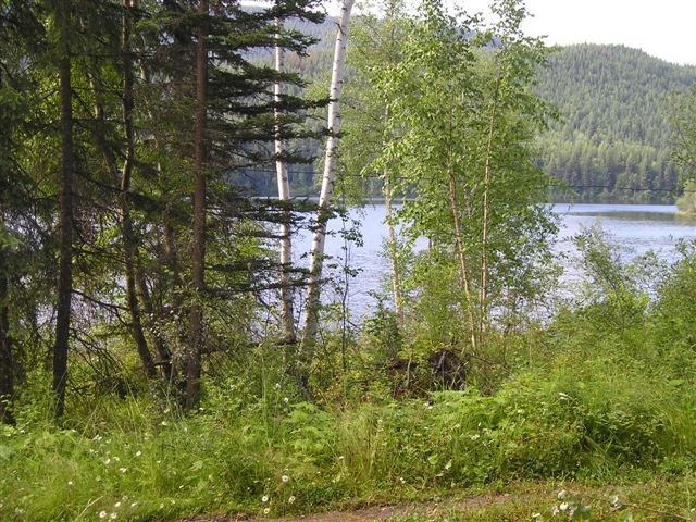 "Photo 5: LOT 13 EAGLE CREEK Road in Canim Lake: Canim/Mahood Lake Home for sale in ""HAWKINS LAKE"" (100 Mile House (Zone 10))  : MLS® # N226700"