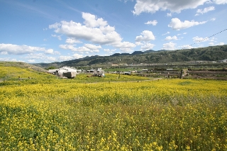Main Photo: 2511 shuswap Road in kamloops: Dallas Agriculture for sale : MLS(r) # 121173