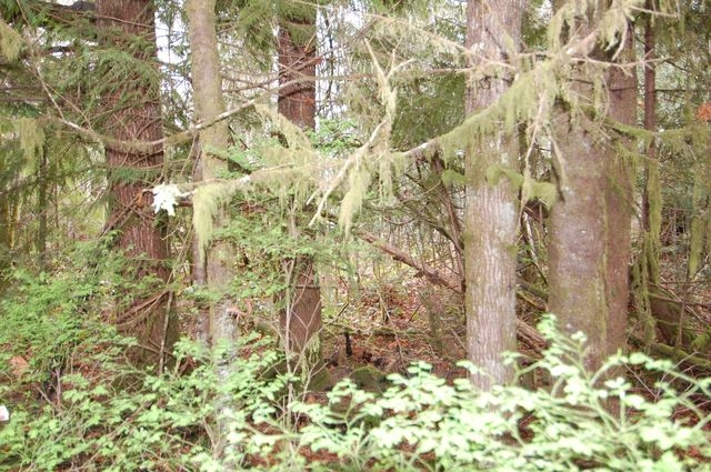 Photo 8: Photos: LOT 6 WALL STREET in HONEYMOON BAY: Lots/Acreage for sale : MLS®# 316008