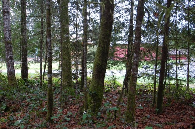 Photo 9: Photos: LOT 6 WALL STREET in HONEYMOON BAY: Lots/Acreage for sale : MLS®# 316008