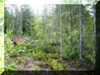 Gentle slope and partially treed building lot in controled subdivision close to the Shuswap Lake.  Build you dream home
