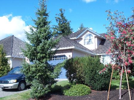 Main Photo: 16593 79A Ave Surrey: House for sale (Fleetwood Tynehead)  : MLS(r) # F2519906