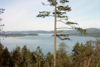 Main Photo: Lot 4 Meyer Road: Residential Detached for sale (Saltspring Island)  : MLS® # n/a