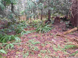 Main Photo: LOT D HEAL Road: Roberts Creek Home for sale (Sunshine Coast)  : MLS® # R2149518