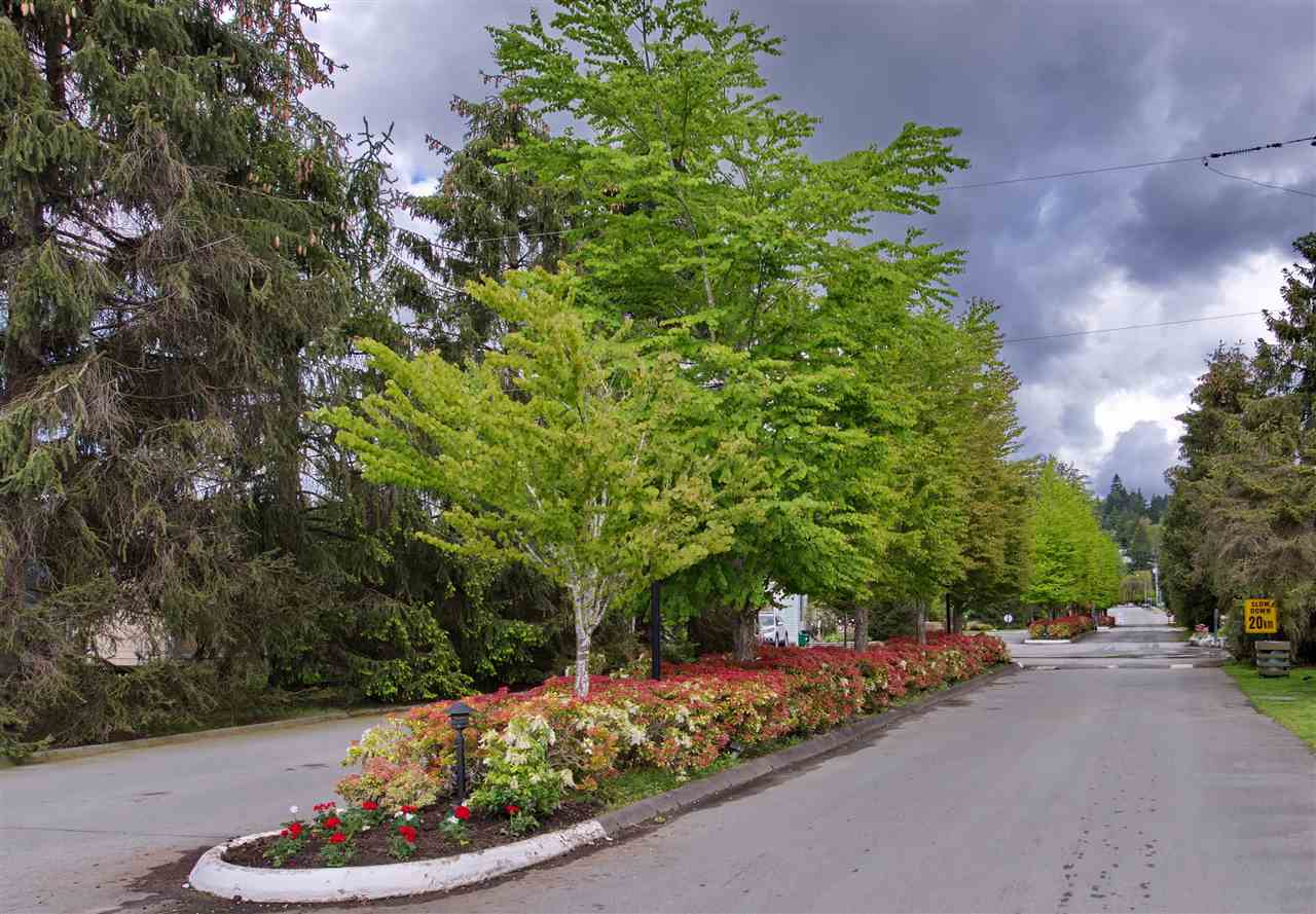 Photo 16: 274 201 CAYER Street in Coquitlam: Maillardville Manufactured Home for sale : MLS® # R2163814