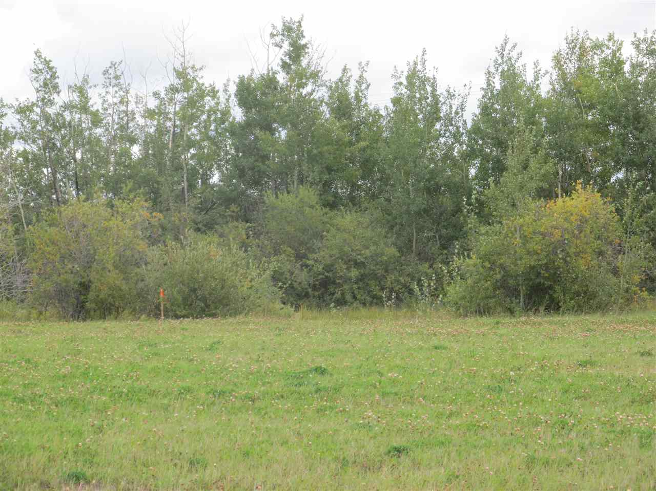 Photo 6: 59512 RR 255: Rural Westlock County Rural Land/Vacant Lot for sale : MLS(r) # E4037975