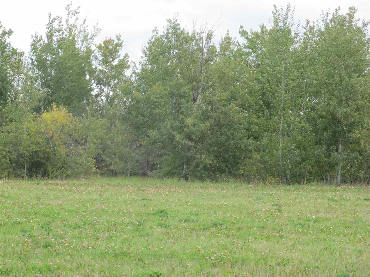 Photo 5: 59512 RR 255: Rural Westlock County Rural Land/Vacant Lot for sale : MLS(r) # E4037975