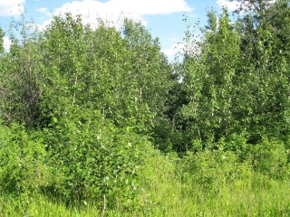 Main Photo: 42 56110 Rge Rd 13: Rural Lac Ste. Anne County Rural Land/Vacant Lot for sale : MLS® # E4071957