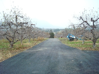 Main Photo: Okanagan Orchard w/View