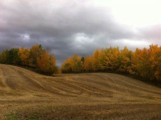 Main Photo: 53020 Rge Rd 14: Rural Parkland County Rural Land/Vacant Lot for sale : MLS® # E4091335