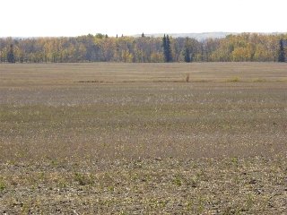 Main Photo: Hwy #37 Rge Rd 271: Rural Sturgeon County Rural Land/Vacant Lot for sale : MLS(r) # E4010173