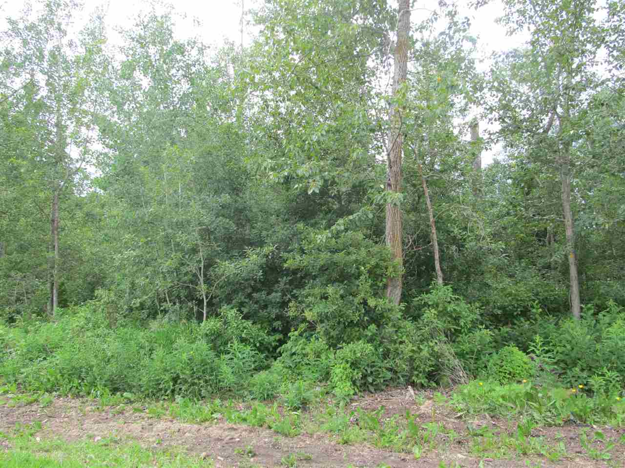 Photo 4: 453 Lakeview Drive: Rural Lac Ste. Anne County Rural Land/Vacant Lot for sale : MLS® # E4046326