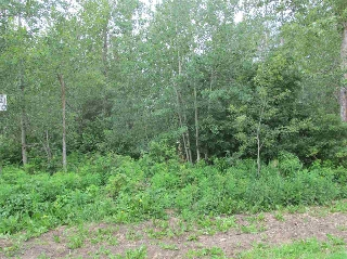 Main Photo: 453 Lakeview Drive: Rural Lac Ste. Anne County Rural Land/Vacant Lot for sale : MLS® # E4046326