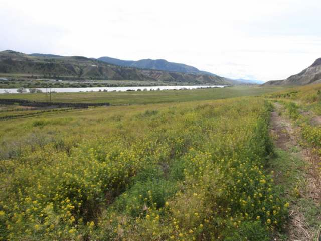 Photo 23: 2511 E SHUSWAP ROAD in : South Thompson Valley Lots/Acreage for sale (Kamloops)  : MLS(r) # 135236