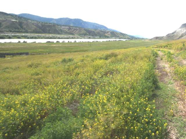 Photo 24: 2511 E SHUSWAP ROAD in : South Thompson Valley Lots/Acreage for sale (Kamloops)  : MLS(r) # 135236
