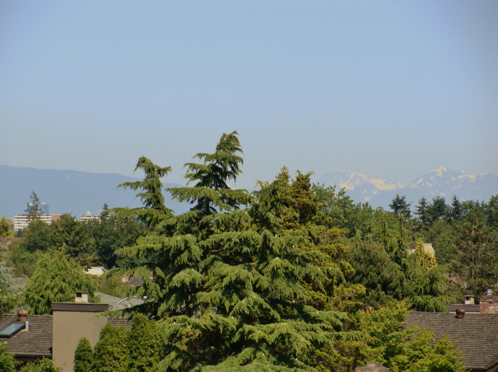 "Photo 18: 320 8880 NO 1 Road in Richmond: Boyd Park Condo for sale in ""APLLE GREENE"" : MLS® # V898589"