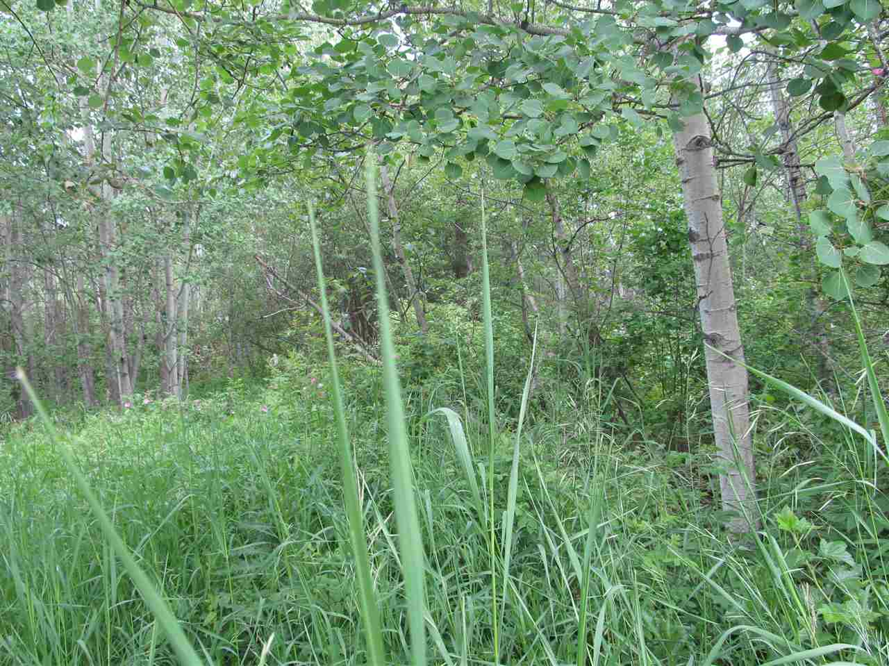 Photo 3: 451 Lakeview Drive: Rural Lac Ste. Anne County Rural Land/Vacant Lot for sale : MLS(r) # E4046294