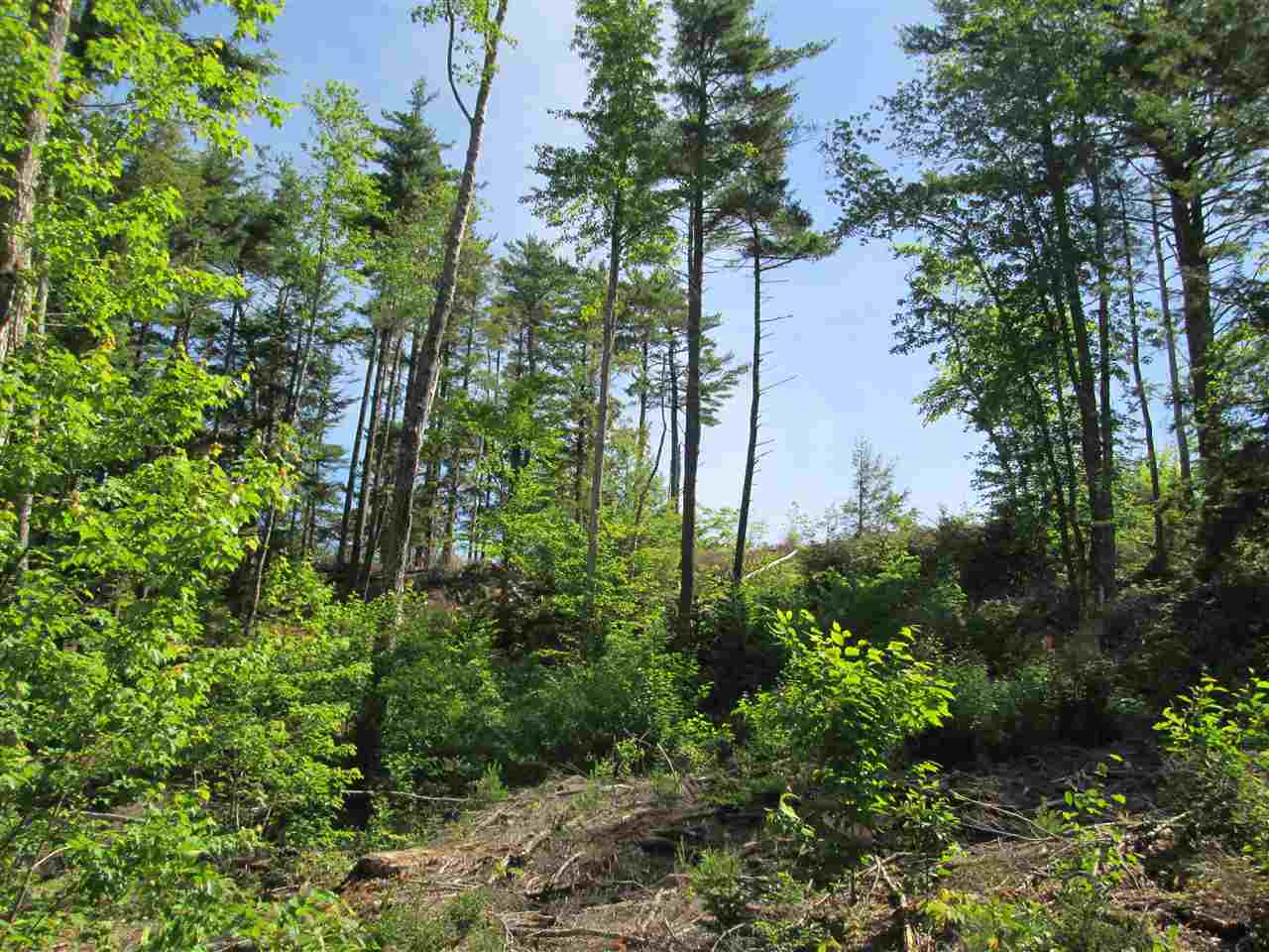 Photo 7: Photos: Lot 41 Homestead Estates Drive in Italy Cross: 405-Lunenburg County Vacant Land for sale (South Shore)  : MLS® # 201610383