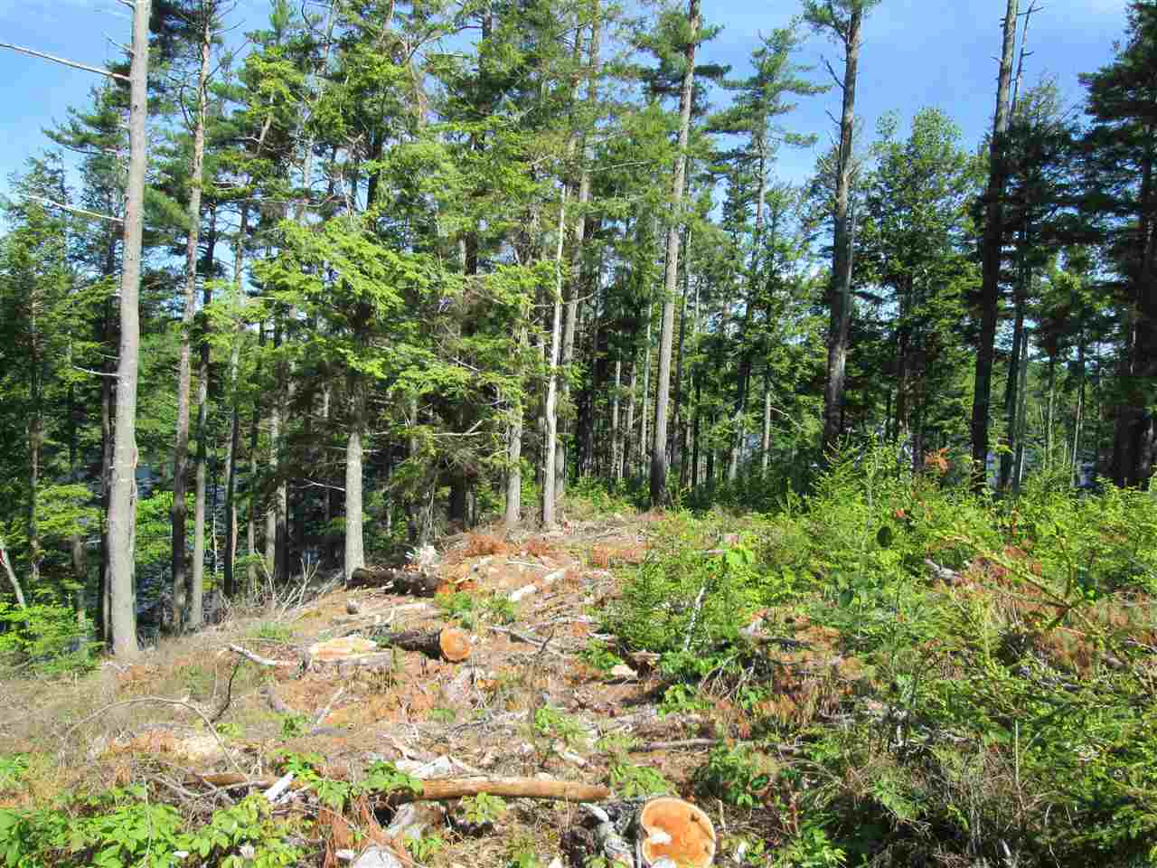 Photo 12: Photos: Lot 41 Homestead Estates Drive in Italy Cross: 405-Lunenburg County Vacant Land for sale (South Shore)  : MLS®# 201610383