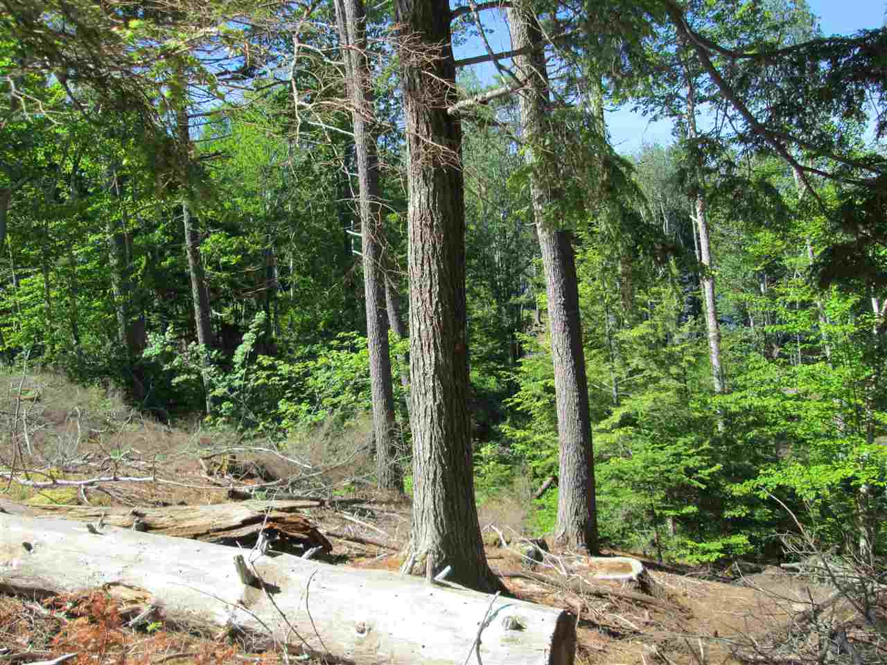 Photo 13: Photos: Lot 41 Homestead Estates Drive in Italy Cross: 405-Lunenburg County Vacant Land for sale (South Shore)  : MLS® # 201610383