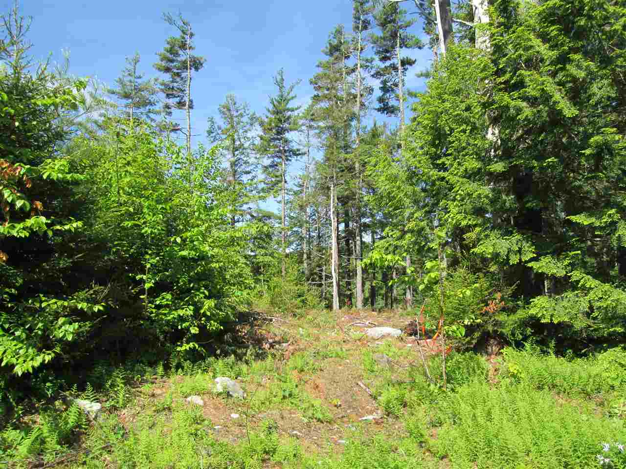 Photo 15: Photos: Lot 41 Homestead Estates Drive in Italy Cross: 405-Lunenburg County Vacant Land for sale (South Shore)  : MLS® # 201610383