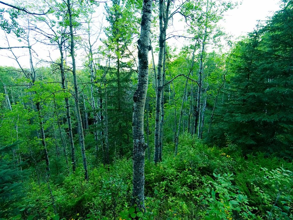 Main Photo: Lot 7 Block1 Range Road 123 B in Whitecourt: Whitecourt Rural Rural Land/Vacant Lot for sale (Woodlands County)  : MLS® # 44501