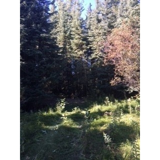 Main Photo: TWP 623A to RR 231: Rural Athabasca County Rural Land/Vacant Lot for sale : MLS® # E4081968