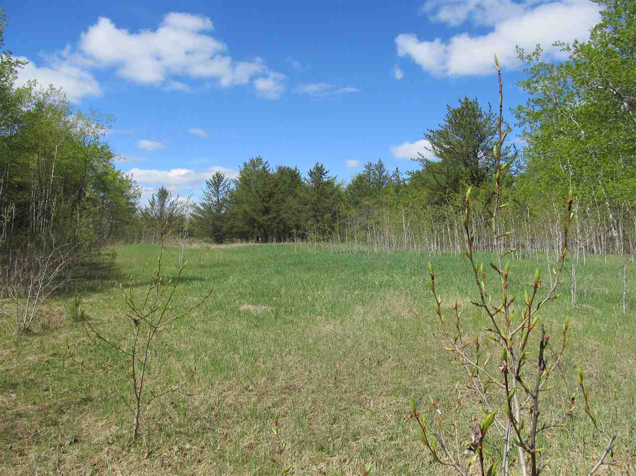 Photo 11: RR 225 North of Twp 590: Rural Thorhild County Rural Land/Vacant Lot for sale : MLS® # E4065164