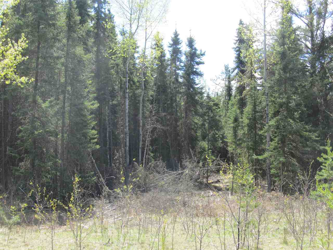 Photo 15: RR 225 North of Twp 590: Rural Thorhild County Rural Land/Vacant Lot for sale : MLS® # E4065164