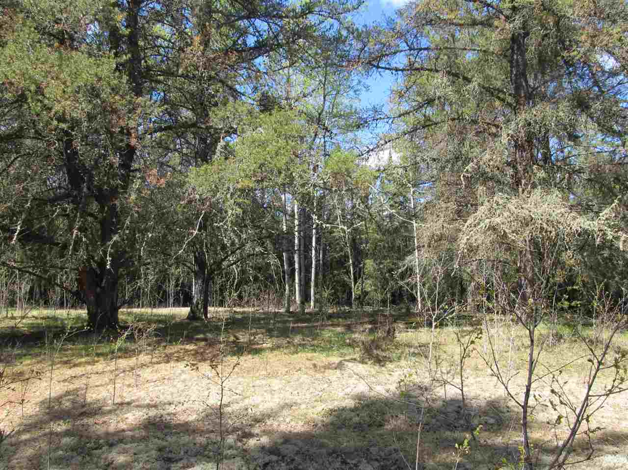 Photo 17: RR 225 North of Twp 590: Rural Thorhild County Rural Land/Vacant Lot for sale : MLS® # E4065164