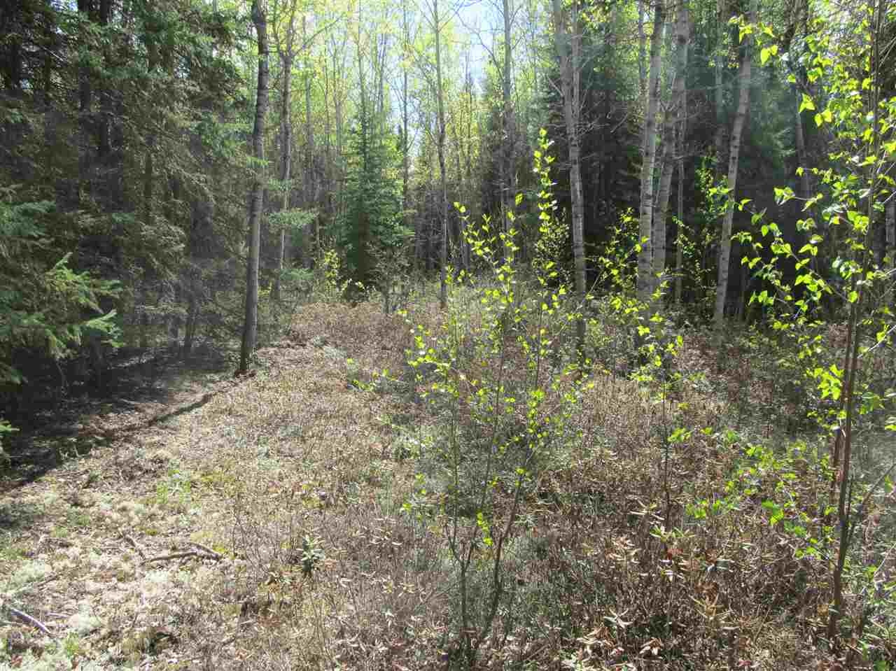 Photo 18: RR 225 North of Twp 590: Rural Thorhild County Rural Land/Vacant Lot for sale : MLS® # E4065164