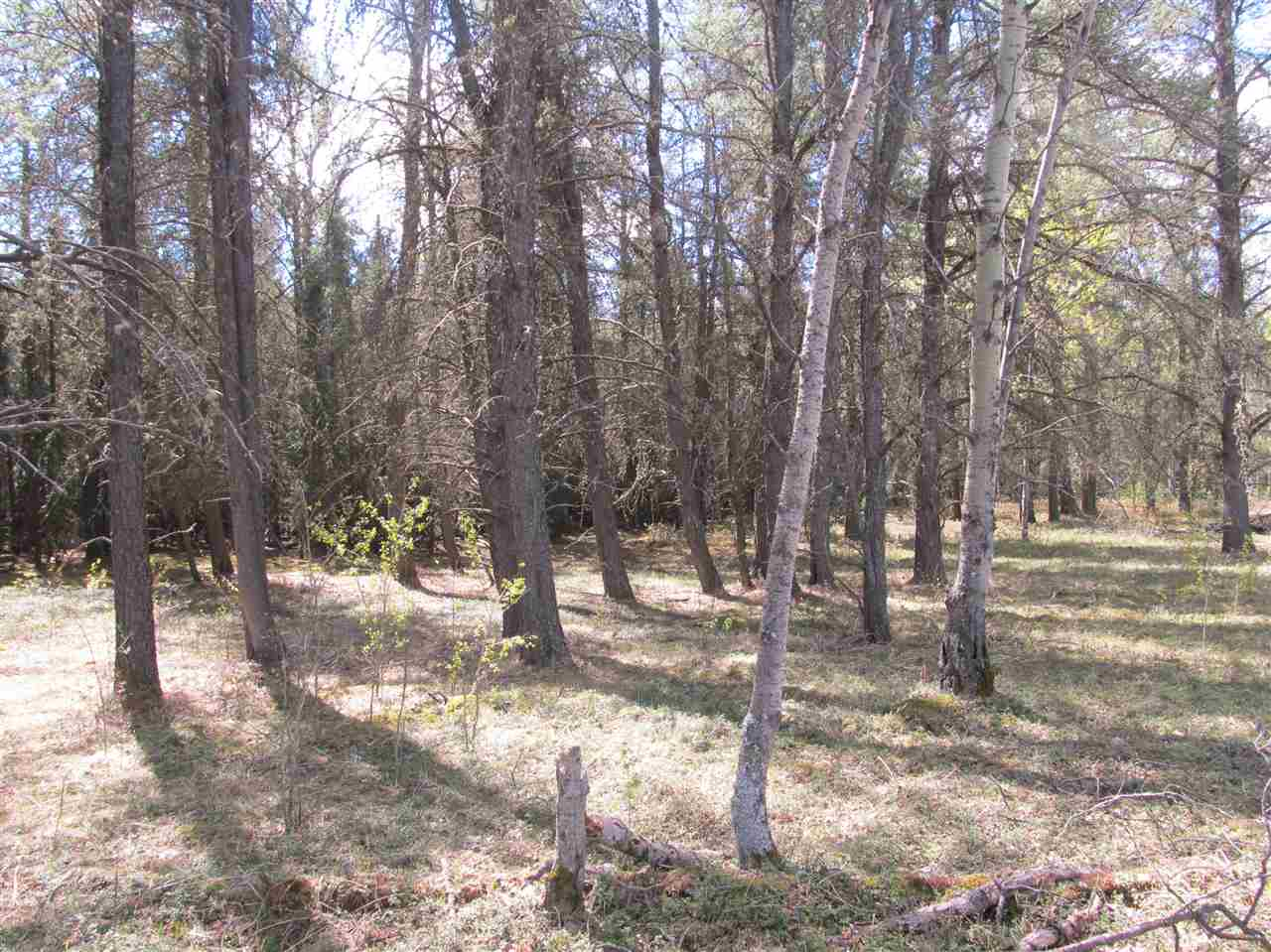 Photo 16: RR 225 North of Twp 590: Rural Thorhild County Rural Land/Vacant Lot for sale : MLS® # E4065164