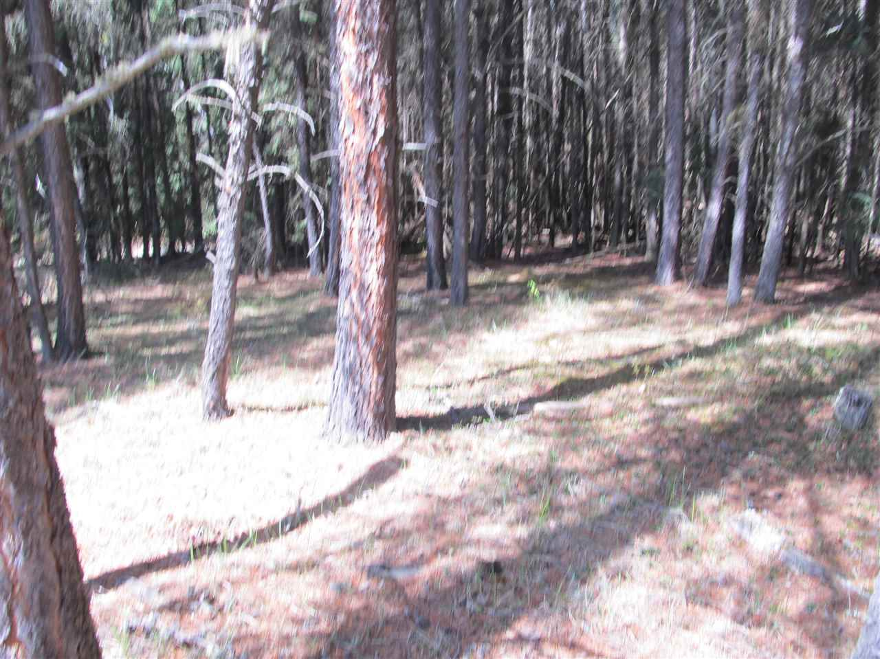 Photo 25: RR 225 North of Twp 590: Rural Thorhild County Rural Land/Vacant Lot for sale : MLS® # E4065164