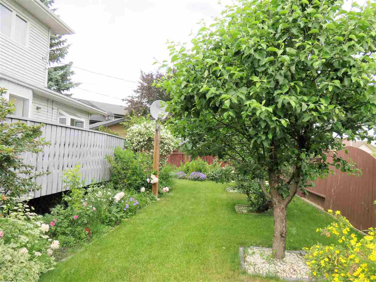 Here a view of the backyard & the oversized deck too!  Take Note of all the fruit trees!! Like Apple &  Cherry Trees!! :)