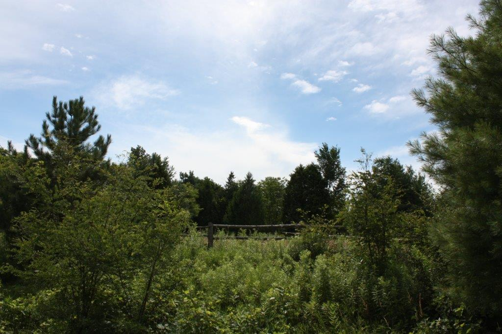 Main Photo: 11358 County Road 2 Rd in Grafton: Land Only for sale : MLS® # 511350277