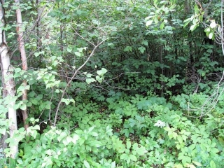 Main Photo: 215 4224 Twp Rd 545: Rural Lac Ste. Anne County Rural Land/Vacant Lot for sale : MLS® # E4076984