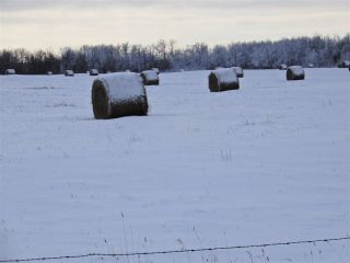 Main Photo: Twsp 575A Range Road 230: Rural Sturgeon County Rural Land/Vacant Lot for sale : MLS® # E4087456