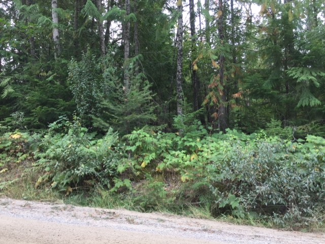 Main Photo: Lot 9 Mountain Drive in Anglemont: North Shuswap Land Only for sale (Shuswap)  : MLS®# 10158352