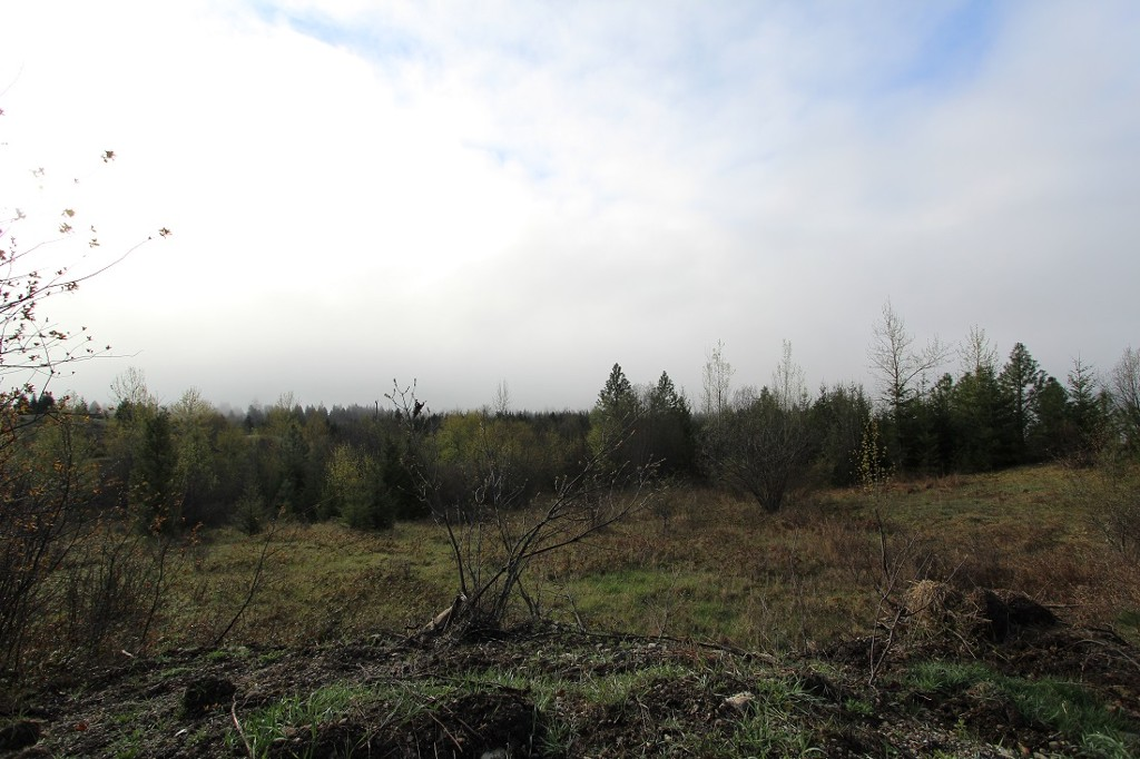 Main Photo: 1/4 2700 Block Squilax Anglemont Road in Lee Creek: North Shuswap Land Only for sale (Shuswap)  : MLS® # 10138544