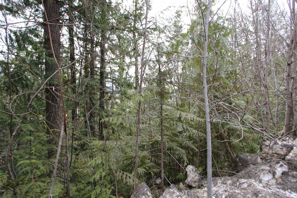 Main Photo: Lot 28 Vickers Trail in Anglemont: North Shuswap Land Only for sale (Shuswap)  : MLS®# 10093853