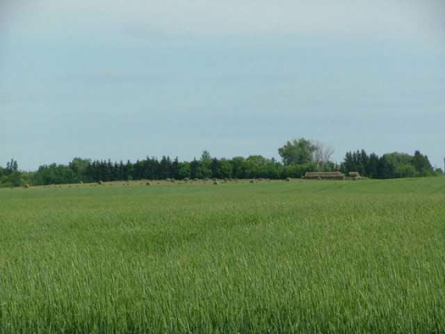 Photo 3: A51069 HWY 814: Rural Leduc County Rural Land/Vacant Lot for sale : MLS(r) # E3345456