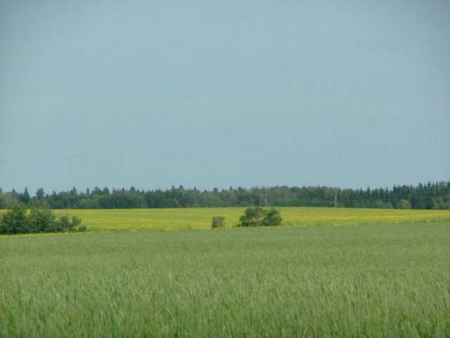 Photo 2: A51069 HWY 814: Rural Leduc County Rural Land/Vacant Lot for sale : MLS® # E3345456