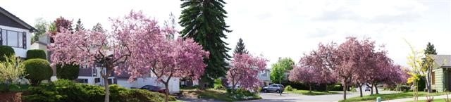 Photo 58: 110 WADDINGTON DRIVE in Kamloops: Sahali Residential Detached for sale : MLS(r) # 110059