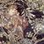 Alphonse mucha woman with a daisy