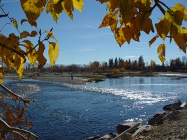Fall Foliage Missoula Montana